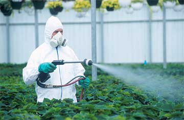 Fungicide on Fruits and Vegetables1 min read